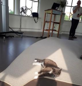 Кіт Йєт, улюбленець спіробітників і відвідувачів музею